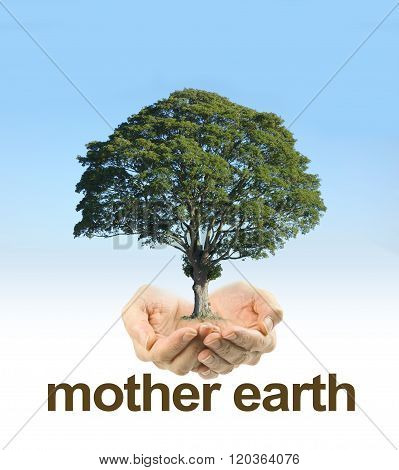 Look After Mother Earth - female cupped hands on a clear blue sky background fading to white with a mature tree floating above hands and the words MOTHER EARTH underneath