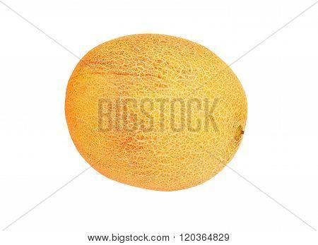 Whole Cantaloup Melon