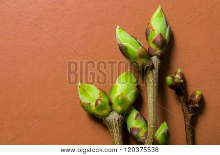 Buds Swell Background On Terra-cotta. Three Twigs