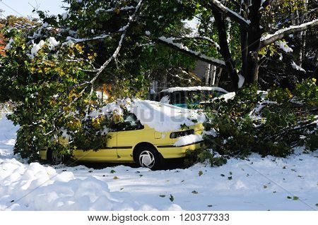 car damaged by fallen tree branches in snow storm