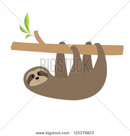 Sloth Hanging On Tree Branch . Cute Cartoon Character. Wild Joungle Animal Collection. Baby Educatio