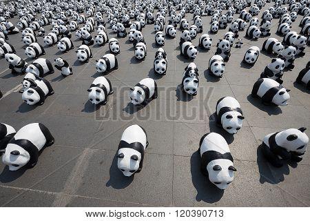 1600 Pandas In Thailand