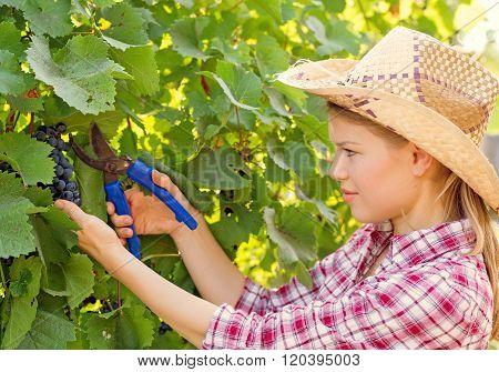 Female farmer in vineyard