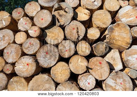 Wooden Logs Of Pine Stacked