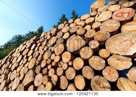Wooden Logs With Pines Trees