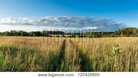 Meadow With Grass And Wildflowers And Country Road Panoramic Landscape