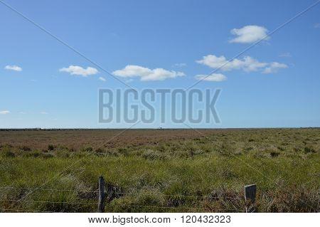 lansdcape marsh