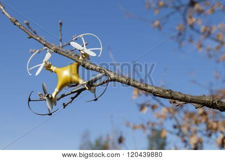 Drone quadcopter crashed on tree in city park