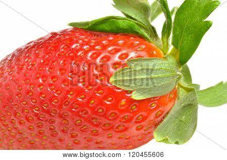 Strawberry closeup macro photo. White background.