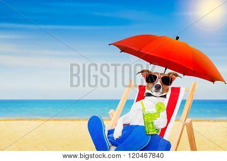 Dog Summer  Beach Chair