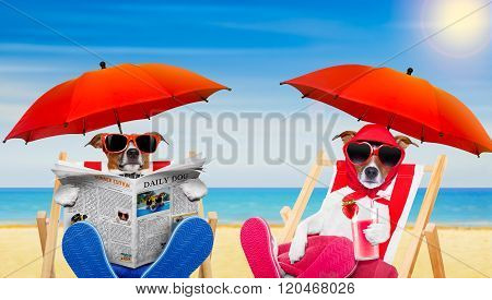 Funny Couple Of Dogs In Love At The Beach