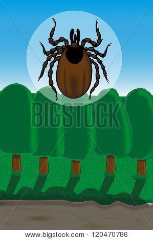 Ticks Are Vectors Of Lyme Borreliosis And Tick-borne Encephalitis