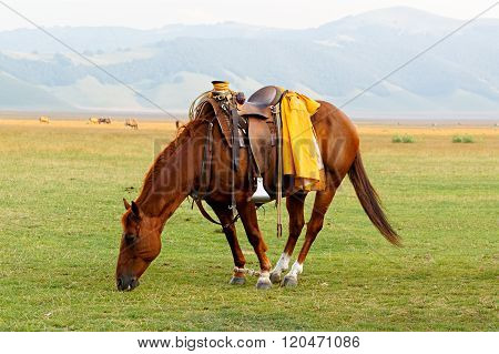 Brown saddled horse grazing in field.