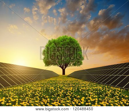 Solar energy panels with tree against sunset sky.Clean energy.