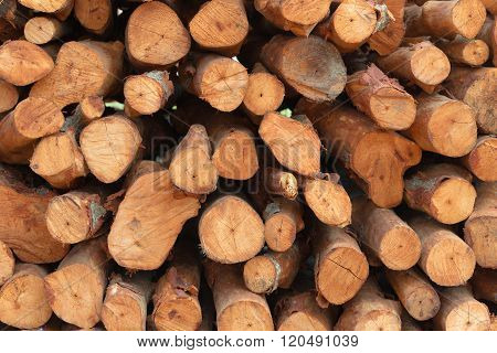 Stack of wood, concept of industry of wood.
