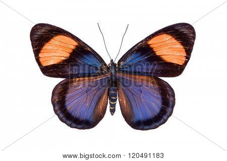 Beautiful colorful butterfly with black, red and orange wings isolated on white. Nymphalidae, Meadow Wanderer
