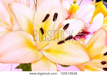 Macro Image Of A Lily Flower Blossom