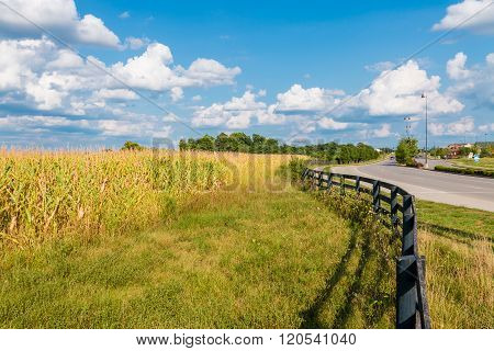 Countryside and city road. Yellow corn field behind black fence near city shopping plaza road. Country landscape.
