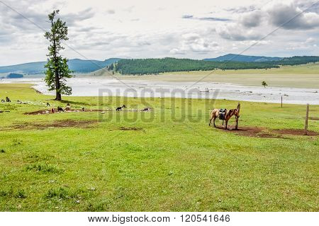 Lone Tethered Horse, Northern Mongolia