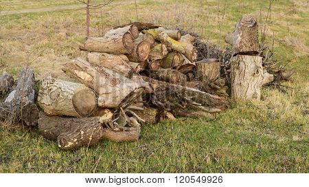 A small pile of firewood stacked. Old Hemp affected by fungi and lichen. Firewood for baths and fires. poster
