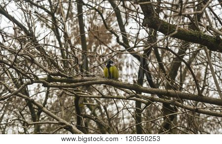bird on a tree