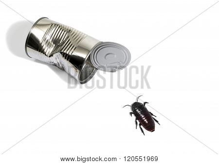 Portrait Of A Cockroach And A Tin Can