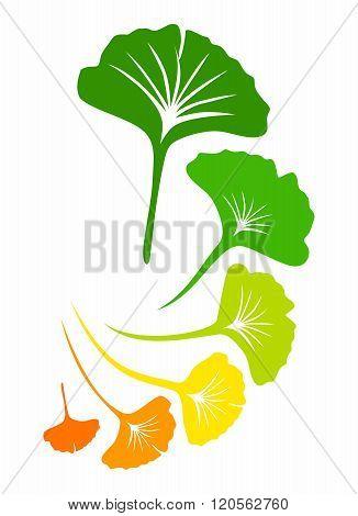 Vector Ginkgo biloba Leaf Arrangement Background Pattern Illustration