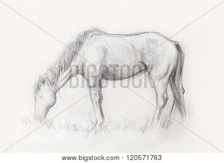 Draw pencil horse on old paper, And old vintage paper structure.