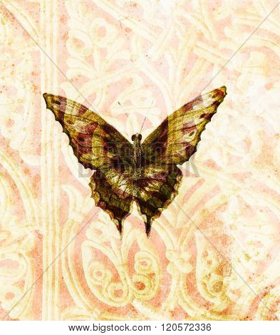 Butterfly and ornaments. Original hand drawn and computer collage.