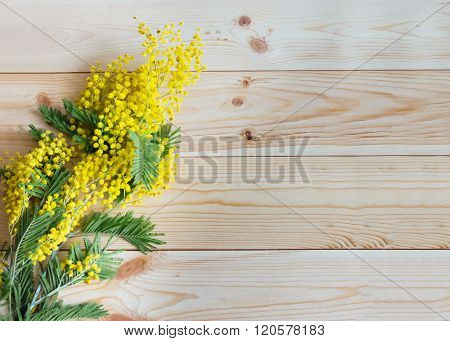A Sprig Of Mimosa On Wooden Background