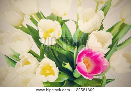 Bouquet From White Flowers Of Tulips And One Red Closeup