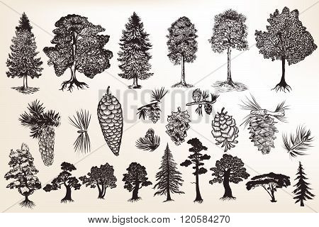 Collection Or Set Of Hand Drawn Trees In Engraved Style