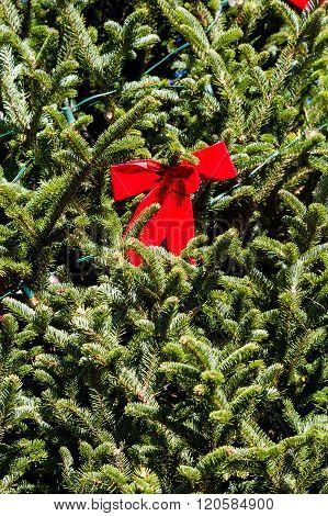 Red Velvet Bow In Christmas Tree