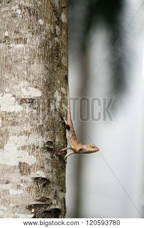 Changeable Lizard On Tree Trunk