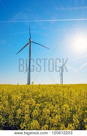 Sunshine, rapeseed and windwheels