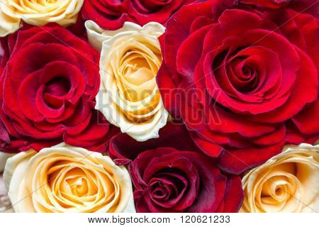 Red And Yellow Floral Roses Background