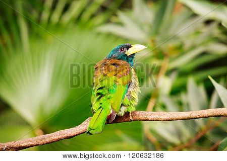 Exotic colorful bird sitting on a branch