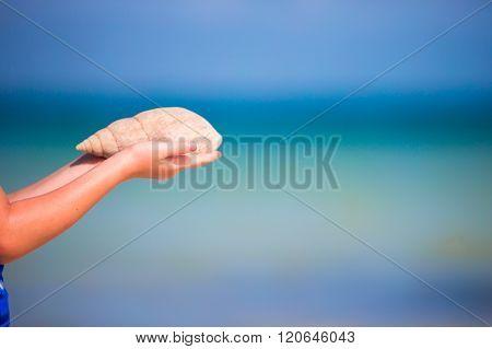 Closeup of hands holding beautiful seashells background the ocean