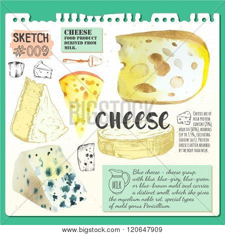 Food sketchbook with set of different noble cheeses.