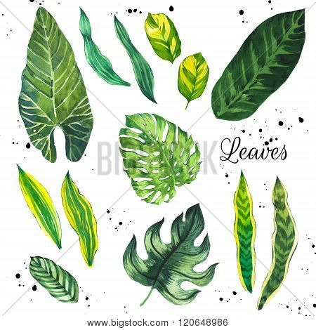 Illustration with tropical leaves. Watercolor set of green leaves.