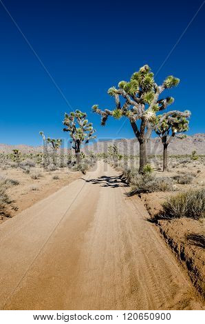 Sandy Desert Road With Joshua Trees