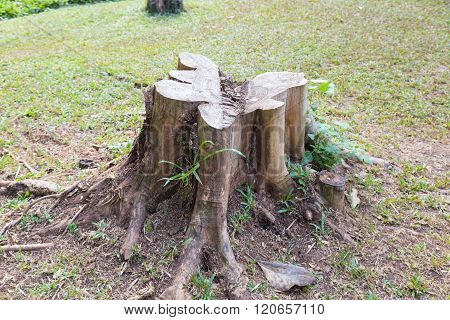 Stump In The Grass.