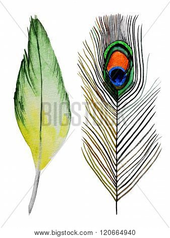 Watercolor feathers illustration