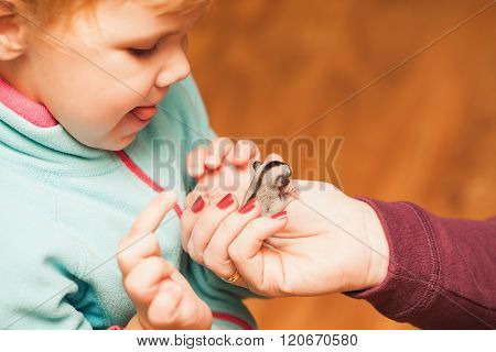 Little Baby Girl Playing With Sugar Glider Cub