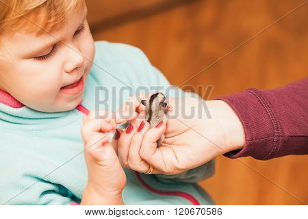 Little Baby Girl Plays With Sugar Glider Cub