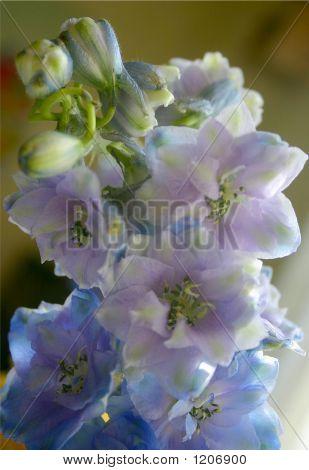 Fragile Flowers