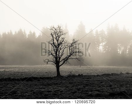 Lonesome tree in misty autumn landscape