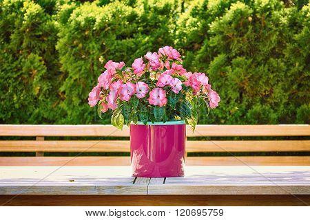 Flowers In The Flower Pot