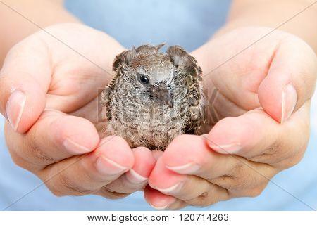 Human Hands Holding Small Bird