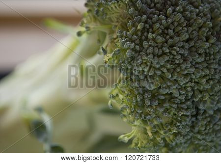 Macro Photography Of A Fresh Green Broccoli Florets